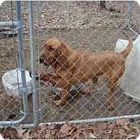 Adopt A Pet :: Rosie - Georgetown, KY