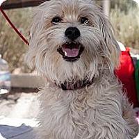 Adopt A Pet :: Jazzie - Scottsdale, AZ