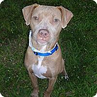 Adopt A Pet :: Chloe - Pompano Beach, FL