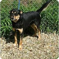 Adopt A Pet :: Cookie - Toronto/Etobicoke/GTA, ON