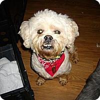 Adopt A Pet :: Clyde - Sheridan, OR
