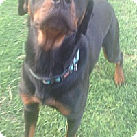 Adopt A Pet :: Miller - McAllen, TX