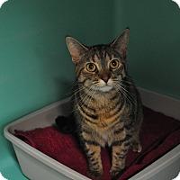 Adopt A Pet :: Lilly - Rockaway, NJ