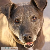 Labrador Retriever Mix Dog for adoption in Cedar Crest, New Mexico - Beau