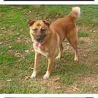 Adopt A Pet :: PETEY - EDEN PRAIRIE, MN