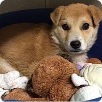 Adopt A Pet :: Steve - Littleton, CO