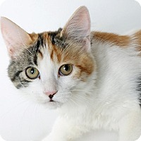 Adopt A Pet :: Mai Tai - Mountain Center, CA