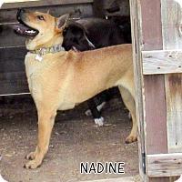 Adopt A Pet :: Nadine - Lindsay, CA