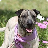 Adopt A Pet :: Sophie - Corona, CA