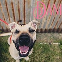 Adopt A Pet :: Danica - Cheney, KS