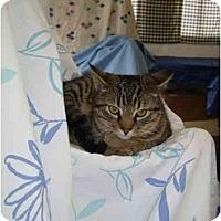 Adopt A Pet :: Teddy - Jenkintown, PA
