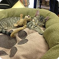 Adopt A Pet :: Horus - Lake Charles, LA