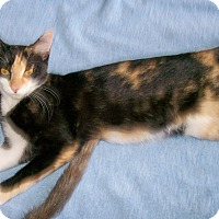 Adopt A Pet :: Blaze - Scottsdale, AZ