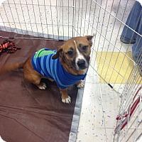 Adopt A Pet :: Allawah - East Rockaway, NY