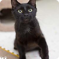 Adopt A Pet :: Chewy - Merrifield, VA