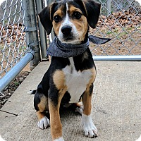 Adopt A Pet :: Oreo - Sylva, NC