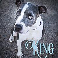 Adopt A Pet :: King - Cheney, KS