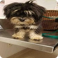 Adopt A Pet :: *ZOEY - Bakersfield, CA