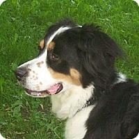Adopt A Pet :: Lady - Rigaud, QC