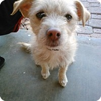 Adopt A Pet :: Milly - Only $65 adoption fee! - Litchfield Park, AZ