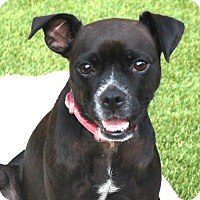 Adopt A Pet :: Jemma - La Habra Heights, CA