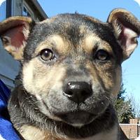 Adopt A Pet :: Baby Zack - Oakley, CA