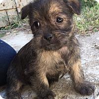 Adopt A Pet :: Albert-Pending Adoption - Omaha, NE