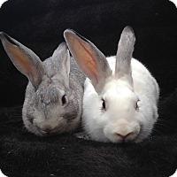 Adopt A Pet :: Ocean & Lincoln - Watauga, TX