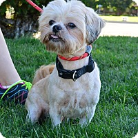 Adopt A Pet :: Mugs - Meridian, ID