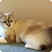 Adopt A Pet :: Sara - Palmdale, CA