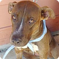 Adopt A Pet :: Mandy - Knoxville, TN