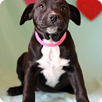 Adopt A Pet :: Elena - Waldorf, MD