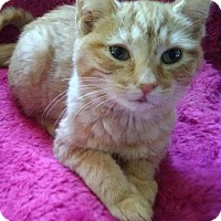Adopt A Pet :: Abril - McDonough, GA