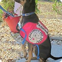 Adopt A Pet :: Brewster - Marianna, FL