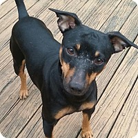 Adopt A Pet :: Ricky  LOVEBUG - Tunica, MS