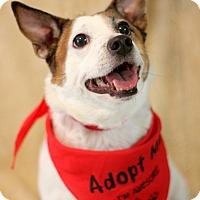 Adopt A Pet :: Heidi - Dalton, GA