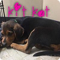 Adopt A Pet :: Kit Kat - Garden City, MI