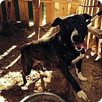 Adopt A Pet :: Salsa - San Diego, CA