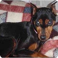 Adopt A Pet :: Harmony - Madison, WI