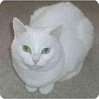 Adopt A Pet :: Vicky - Toronto, ON