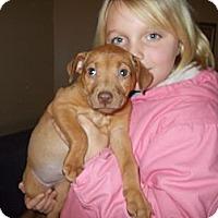 Adopt A Pet :: Piper - Apex, NC