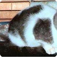 Adopt A Pet :: Gracy - Kensington, MD