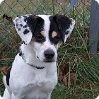 Adopt A Pet :: MAX - Mahopac, NY