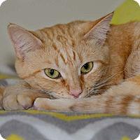 Adopt A Pet :: Stella - Monroe, GA