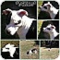 Adopt A Pet :: MILLIE - MILWAUKEE, WI