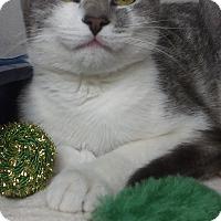 Adopt A Pet :: Little Bitty - Little Neck, NY