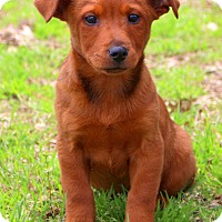 Adopt A Pet :: Dunkin - Glastonbury, CT