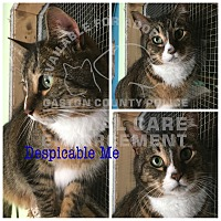 Adopt A Pet :: Despicable Me - Charlotte, NC