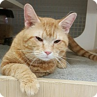 Adopt A Pet :: Jack - at Petco - Germantown, MD