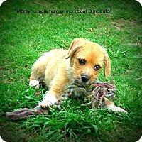 Adopt A Pet :: Marty - Gadsden, AL